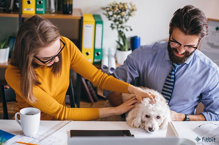 Amener son animal au travail : nos conseils